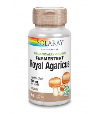 fermentert_royal_agaricus_-_93941